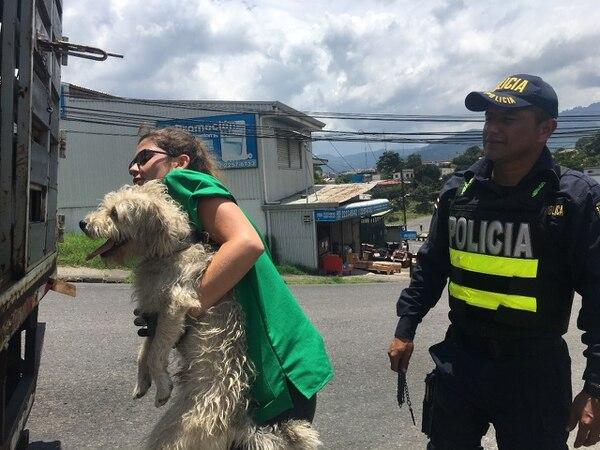 Algunos de los perritos tenían mucha sed. Foto: Guillermo Solano