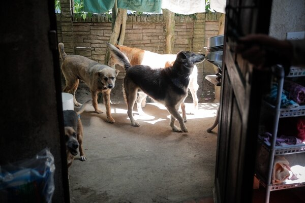 Ala juega y se lleva bien con los otros perritos rescatados que viven con ella. Foto: Jeffrey Zamora.