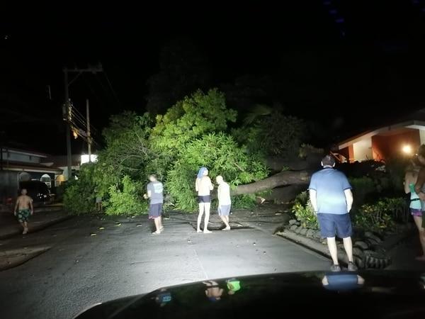 En Guanacaste varios árboles cayeron. Foto: Pegando Porte