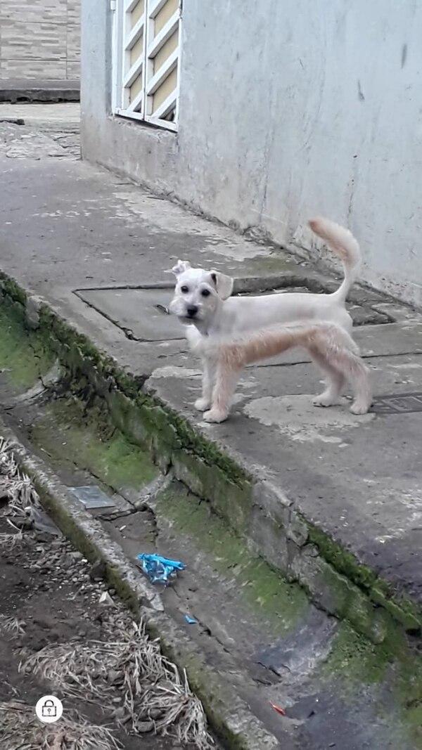 La familia de esta cachorrita está desesperada por encontrarla. Foto cortesía Kattya Martínez