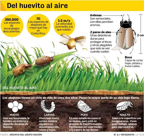 Info sobre la vida del abejón.