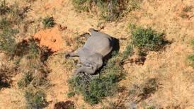 ¿Mató el Covid-19 a 275 elefantes en Botsuana?