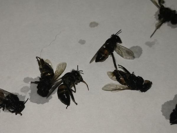 Don Carlos asegura que nunca había visto tantas abejas juntas. Foto: Cortesía