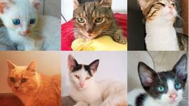 Alegre su corazón y llene de vida el hogar adoptando un gatito