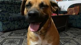 Familia está desesperada por encontrar a su perrito que se perdió hace más de una semana