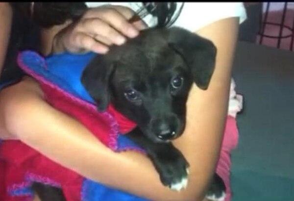 """""""Frijolito"""" fue rescatado en San Isidro de Alajuela luego de haber nacido muy debilito . Facebook"""