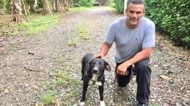 Zaguatico Jerry salvó a niño de 8 años quien fue atacado por un american stafford