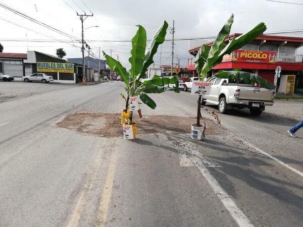 Estas matas de plátano las pusieron para llamar la atención de los conductores del peligro. Foto: Cortesía