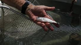 Estudio revela que los peces tienen personalidad