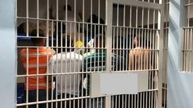 100 reos pasarán más tiempo de la cuenta en celdas del OIJ