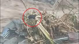 (Videos) Valiente joven se jugó la vida para rescatar a perrito atrapado en medio del río Turrialba
