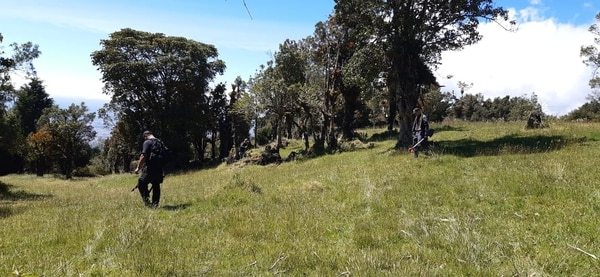 En las faldas del volcán Barva, en Heredia, han encontrado varios restos que serían de la joven Foto: OIJ