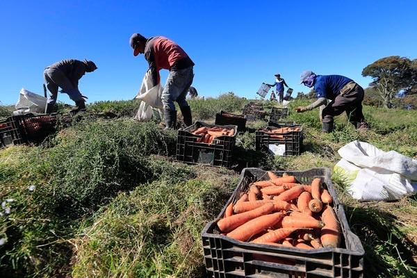 El sector agrícola fue muy golpeado por la pandemia. Foto Rafael Pacheco.