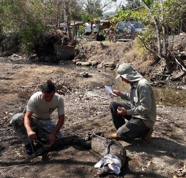 El bicho andaba causando pánico por Jicaral de Puntarenas. Foto: MSP.