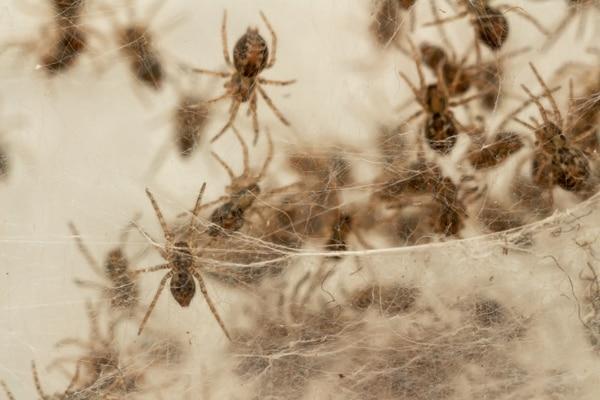 ¿No puede emprender proyectos o avanzar en la vida? Revise si no tiene una plaga de arañas. Foto Shuttlerstock.