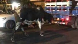 (Video) Toro se escapó de fiestas del Puerto