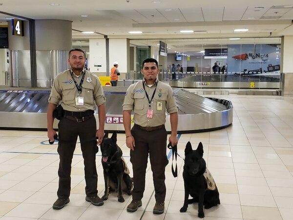 Ali y Archi, son dos perros hondureños que estuvieron en el país para ayudarnos a pelear la guerra contra el Fusarium raza 4. Cortesía.