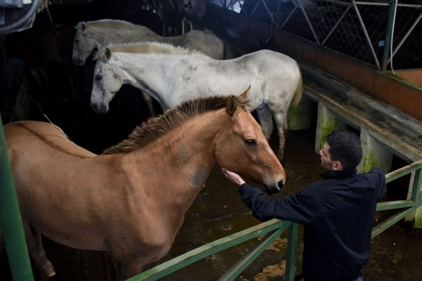 El suero hecho con los caballos ayuda a neutralizar el virus. Foto: Instituto Clodomiro Picado.