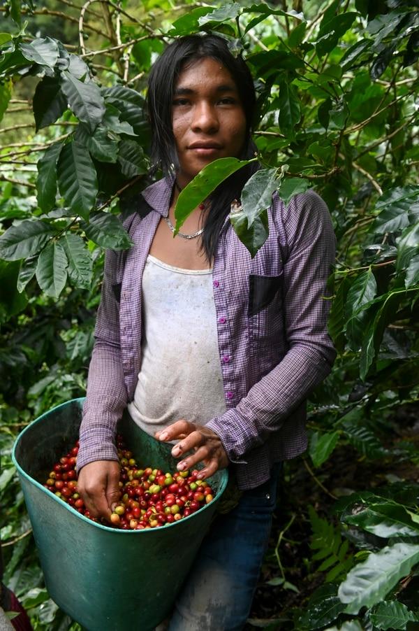 De lunes a viernes Érika es tratada como cualquier hombre que coge café. Foto AFP.