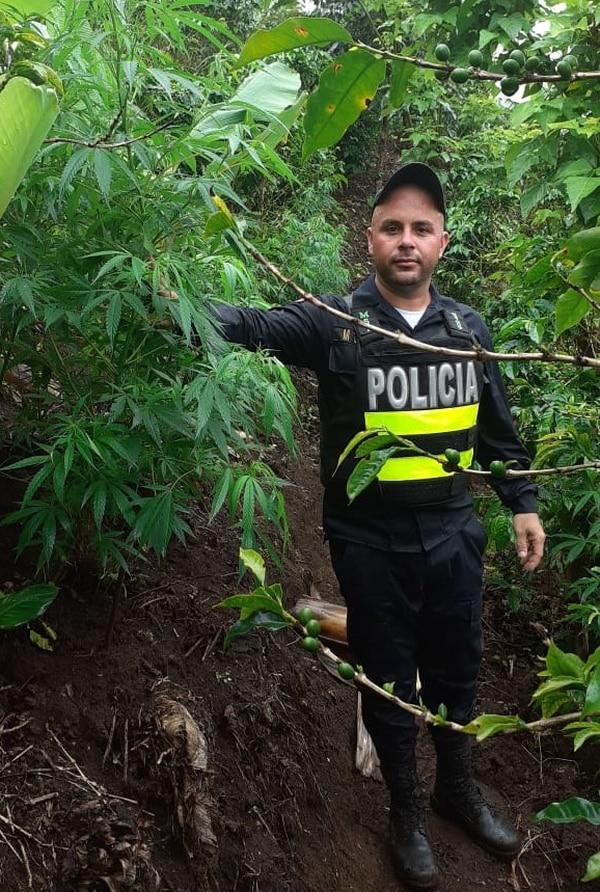 15/07/2019 Decomiso de droga en cafetal. Foto: MSP.
