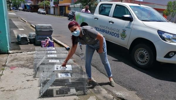 Estas son las jaulas que usan para atraparlos. Foto: Cortesía de Municipalidad de Desamparados.