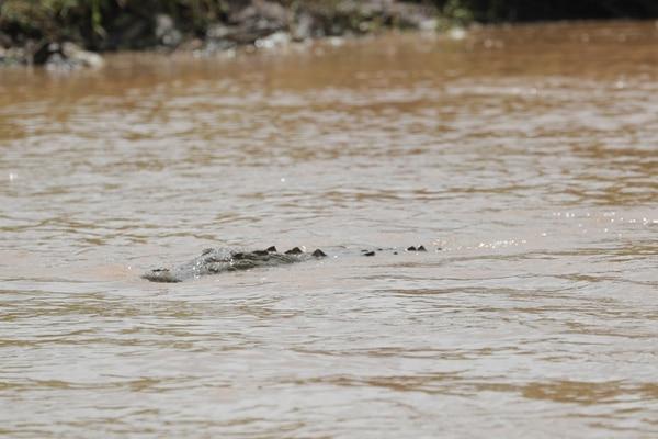 El hombre se salvó que no había cocodrilos tan grandes. Foto con fines ilustrativos