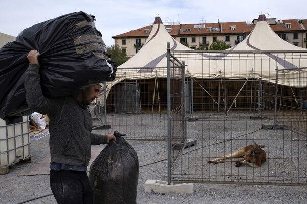 El canguro es de los que está más agüevado con la cuarentena. (Photo by MARCO BERTORELLO / AFP)
