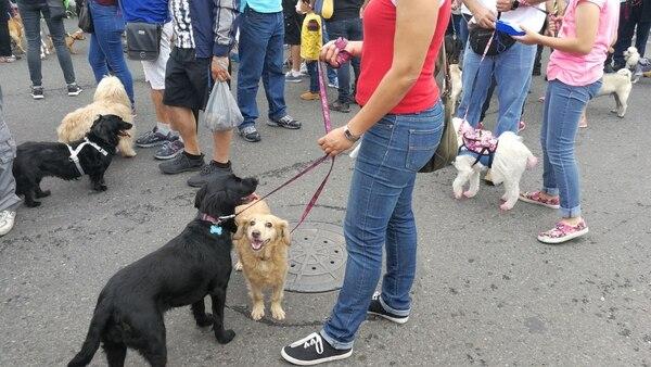 Marcha por la firma de la Ley de Bienestar Animal