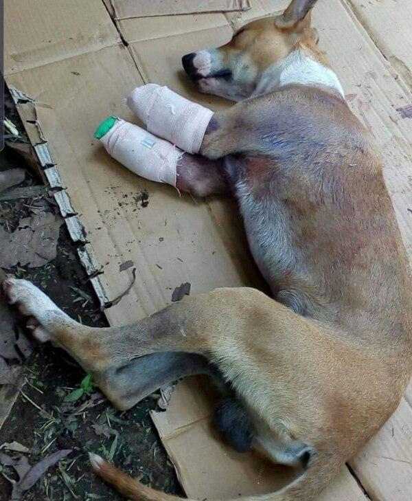 El sábado David hizo todo lo posible por curar a su perrito. Foto Edgar Chinchilla.