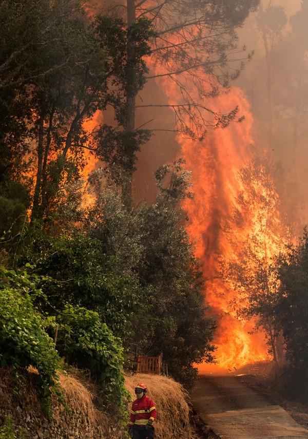 El montón de eucaliptos sembrados, con fines comerciales, alimentan fácilmente las llamas./AFP
