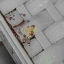Estas gotas pararon el pelo el domingo en Coto Brus, zona sur. Foto: Cortesía