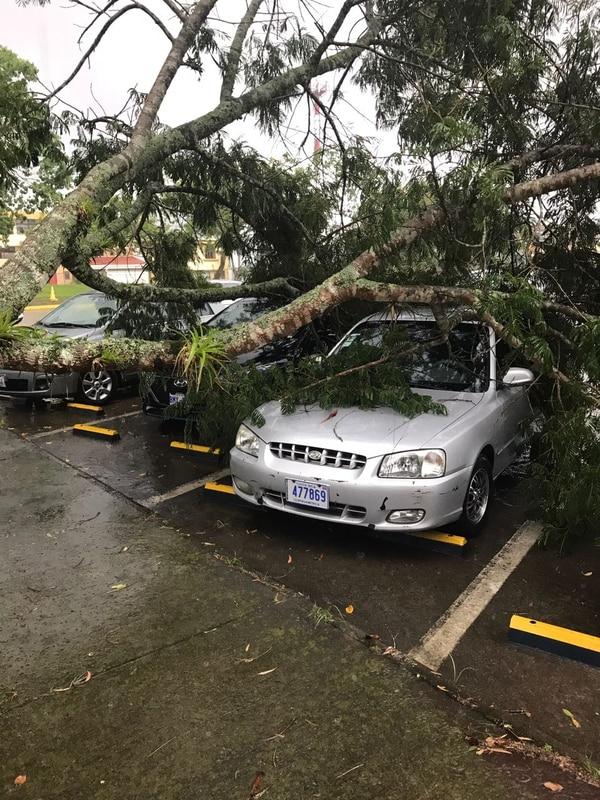 En el TEC se cayeron unos 15 árboles. Foto: Facebook del TEC
