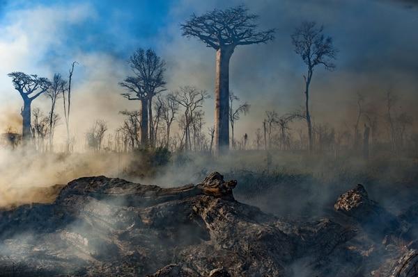 La serie revela los negativos cambios que está sufriendo el planeta. Foto: Archivo.