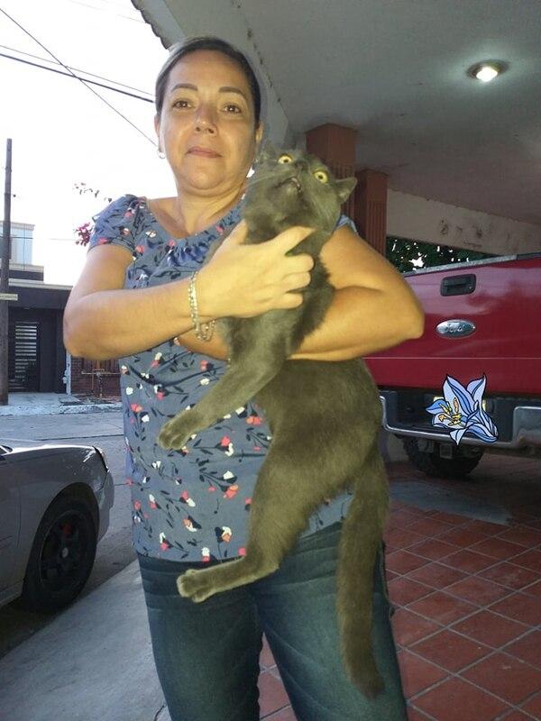 Doña Mary nos mandó esta foto con un Pixi-Huarache a quien no le gustan mucho las fotos...quién sabe que esconde ese gato condenado. Cortesía.
