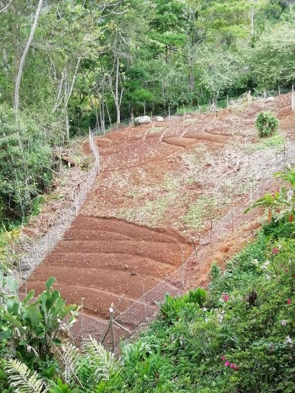 Muchas familias de la zona tienen terrenito, entonces, se han puesto a cultivarlos. Cortesía.