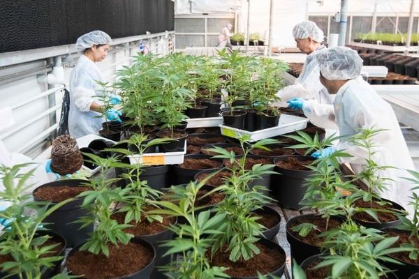 Lugar de Ontario, Canadá, donde cultivan marihuana.
