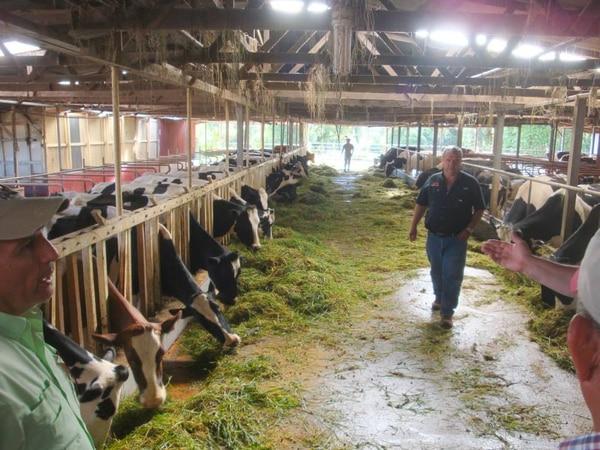 La producción lechera que exporta a Panamá es en su mayoría de pequeños productores. Foto: Cortesía