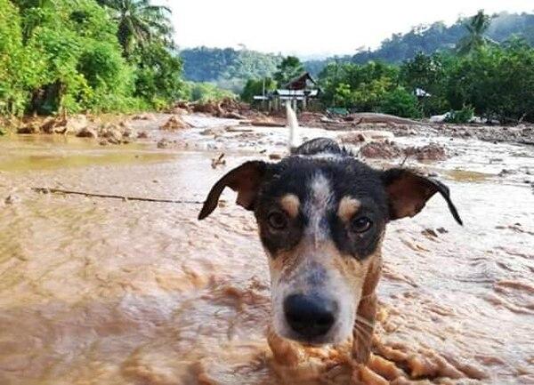 Hasta los animalitos sufrieron con las inundaciones ya que tuvieron que ver donde se refugiaban. Foto: Suministrada por Alfonso Quesada.