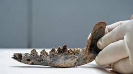 Hueso hallado en Guanacaste podría demostrar que había perros en América Central hace 12.000 años