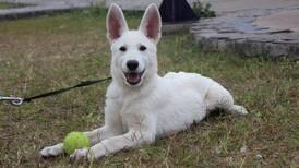 Costa Rica es el quinto país del mundo que más busca sobre perros en Google