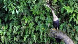 Costa Rica gana prestigioso premio ambiental por su lucha en la conservación de los bosques