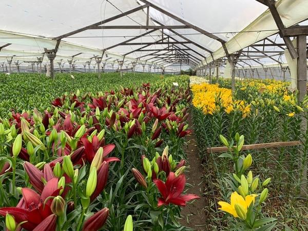 Los productores de flores le piden al ministro de Salud que confirme a las floristerías como negocios que sí pueden abrir. Cortesía.