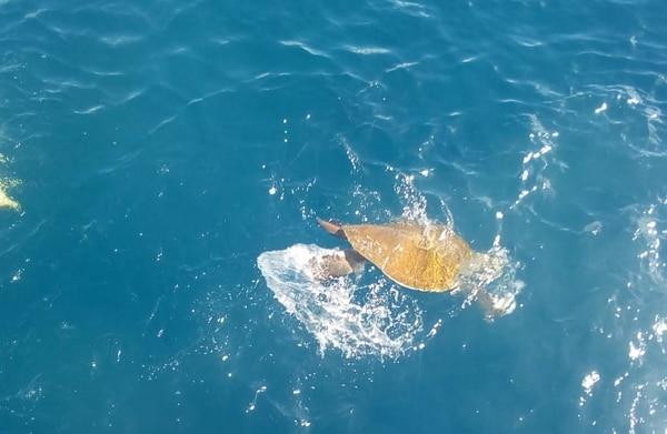 Al final el animal se fue nadando en paz. Foto: MSP.