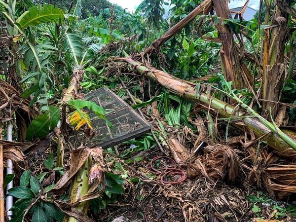 Los fuertes vientos causaron daños pero no dejaron heridos. Foto: José Cordero.