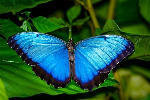 Las mariposas hablan de buena suerte y buenos vientos para el hogar. Foto Shuttlerstock.