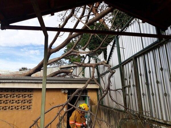 En el Invu 3, en Alajuela, un árbol cayó sobre una casa por los fuertes vientos, por suerte nadie terminó herido. Foto: Bomberos